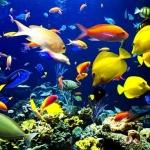 อันเดอร์วอเตอร์เวิลด์พัทยา Underwater World Pattaya บัตรราคาพิเศษ
