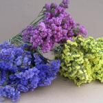 Statice : Mini Bouquet (สเตติส คละสี) / 20 เมล็ด