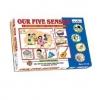 ประสาทสัมผัสทั้งห้า (Our Five Senses)