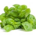 Basil : Italian large leave (อิตาเลี่ยน เบซิล) / 100 เมล็ด
