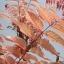 Toona Sinensis (Flamingo Tree) thumbnail 3