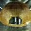 หมวก Cap กากเพชร กลิตเตอร์ Glitter สีทอง thumbnail 4
