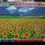 จิ๊กซอว์ 1200 ชิ้น ทุ่งทานตะวัน thumbnail 1