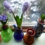 Hyacinth thumbnail 13