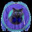 เสื้อยืดพิมพ์ลาย MR.GUGU & Miss GO : Crazy cat sweater thumbnail 1