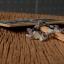 ++ Botsawana Agate บอตสวานาอาเกต รูปทรงธรรมชาติ ++ thumbnail 3