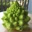 Broccoli บล็อคโคลี่ thumbnail 1