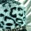 หมวกขนสัตว์นุ่ม ลายเสือโทนเทาดำ ทรงหัวตัด มีโซ่ด้านหน้า thumbnail 3