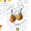 ++ ต่างหู Crazy Lace Agate เครซี่เลซอาเกต ทรงรูปไข่ ++ thumbnail 1
