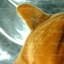 หมวก Bear หูหมี ขนสัตว์นุ่มๆ สีน้ำตาล thumbnail 5