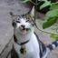 Catnip แคท นิป thumbnail 5