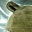 หมวก Bear หูหมี ขนสัตว์นุ่มๆ สีน้ำตาลเทาอมเขียว thumbnail 6